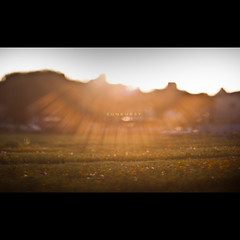 108/365 Sunburst (brandonhuang) Tags: flowers light red orange sun white plant flower green field grass yellow bar dark lens bars warm ray dof bright bokeh free shift vegetation sunburst rays burst tilt shifting lensing tilitshift brandonhuang freelens freelensing tilitshifting