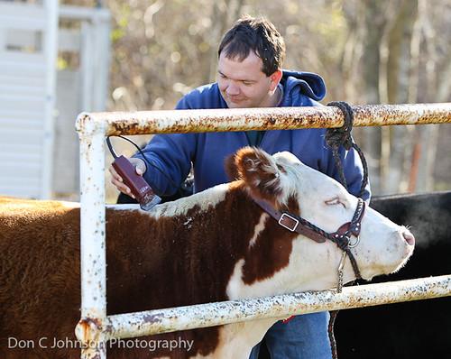 Terrell FFA Holiday Heifer Show-2140