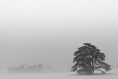 White Out (Leeds Castle), Kent (flatworldsedge) Tags: white mist snow black cold tree castle silhouette fog kent day space leeds freezing negative huddled explored yahoo:yourpictures=blackandwhite yahoo:yourpictures=weather