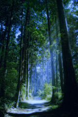 Enchanted Forest (Artypixall) Tags: trees night vancouver bc getty stanleypark moonbeam faa