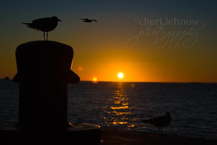IMG_3123_sunset.jpg