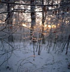 Rollei (J. Bouwmeester) Tags: winter snow 120 film rolleiflex december kodak epson medium format 35 2010 400nc v500