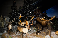 "Deers in Chinese science and technology museum in Beijing • <a style=""font-size:0.8em;"" href=""http://www.flickr.com/photos/29931407@N00/5286348106/"" target=""_blank"">View on Flickr</a>"