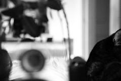 deconstruction (Lake Li Sun) Tags: cats home animal turn construction eyes sensitive fear ears edge foo senses burst circuits protective noise comfort attention stress turns curiosity sounds turning radar alert vibrations deconstruction nerves bramble modems sense fuses modules shifts zarza intruders modulators demodulators