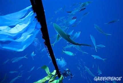 圍繞人工集魚裝置的魚群與鯊魚。(圖片由綠色和平提供)
