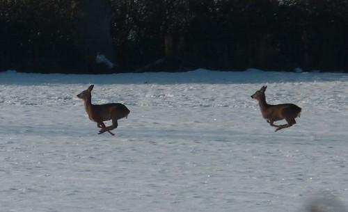 Deer Pods