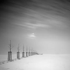 [ winter clouds ] (panfot_O (Bernd Walz)) Tags: longexposure winter sky blackandwhite bw white snow cold tree monochrome clouds landscape quiet peace wind peaceful minimal silence zen minimalism schwarzweiss snowscape