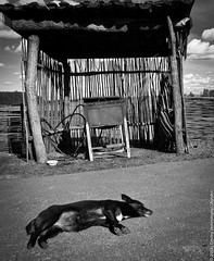 Kossovo: The Dog At Rest (lemmingby) Tags: sleeping blackandwhite bw postprocessed dogs animals clouds travels photojournalism trips belarus kossovo brestregion otherwheres