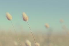 (Luis Vsquez [ Luis3D ]) Tags: chile sky green grass vintage nikon bokeh playa sueos cielo dreams campo biobio hierbas d90 luis3d