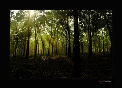 Divine Rays at Raj SURATH  [    ]Front Page EXPLORED # 24 (*HamimCHOWDHURY* [Only Posting photos ]) Tags: life light shadow red portrait blackandwhite white black green nature canon eos colorful faces blu sony surreal explore excellent dhaka vaio rgb frontpage hobigonj bangladesh dlsr 60d sajan164 framebangladesh digombor dawanbari marufdeawan 740425122010595036 havenraybahubolthana rajsurath rupaichararubbergarden rupaichara