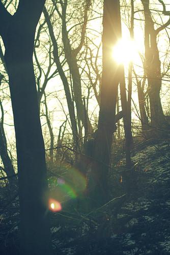 woods_0205