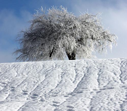 Frozen / Eisig