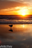 """""""Oh sun how I have missed thee."""" (emceegrady) Tags: california sunset beach canon sandiego seagull 500d oceansideca kiss3 50mm18f 365project t1i socalphotococom"""