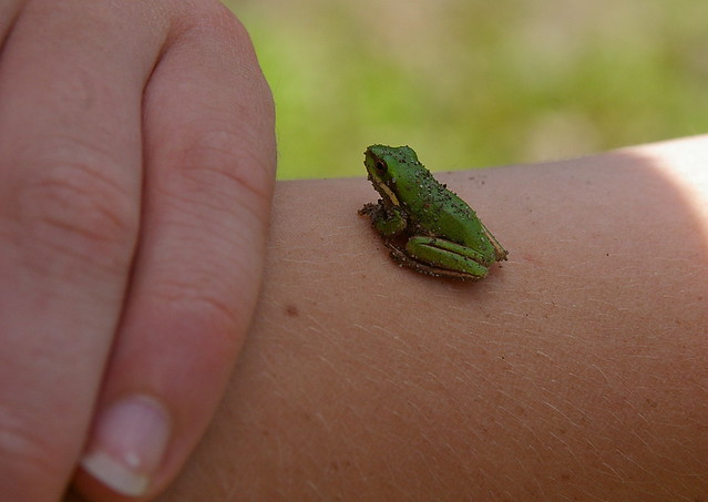 world's tiniest green frog