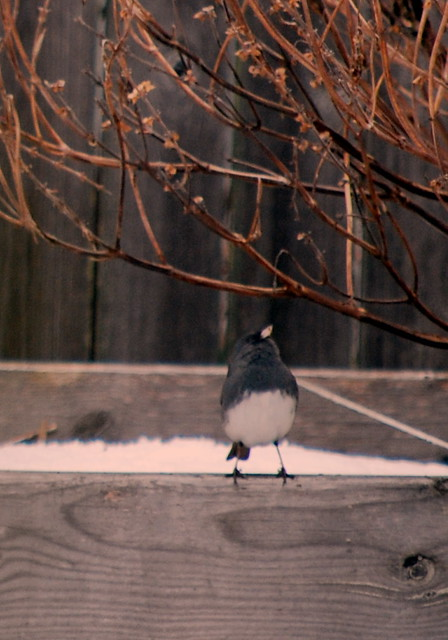 Birdfeeder 11jpg