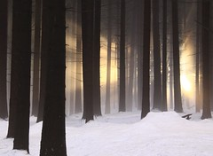 Temple (Linda6769 (OFF)) Tags: mist snow tree silhouette forest germany woods village thuringia sonne sonnenstrahlen sunray conifer nadelbaum konifere brden koniferenimwinter coniferinsnow