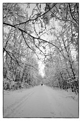 ([ irina mashurova ]) Tags: road winter bw ice rain digital forest nikon sigma after 1224 d5000