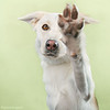 Thumbnail image for Save a Life…  sponsor a pet