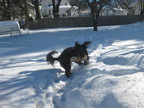 Snowpocalypse January 2011 016