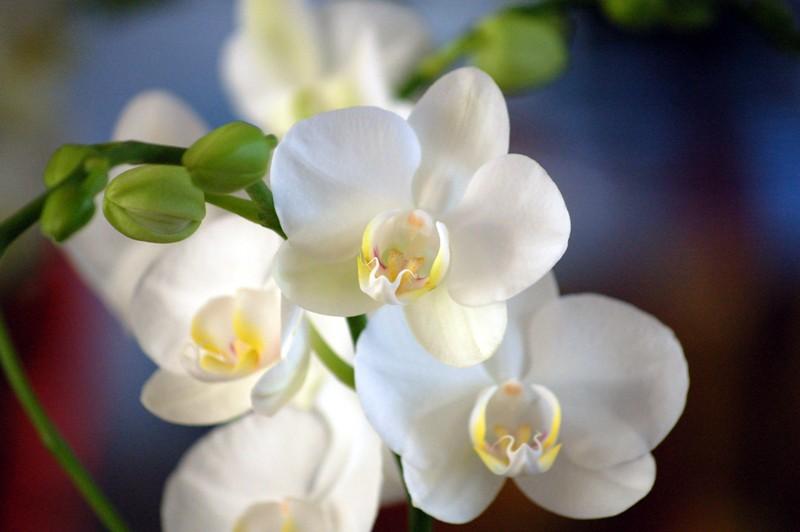 Резултат со слика за photoos of  орхиде�а