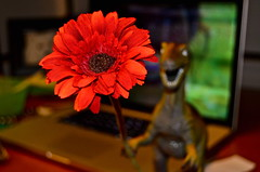 ophelia & the daisy (mmay photography) Tags: camera red flower computer photo nikon focus dino dinosaur teeth picture photograph 365project nikond7000
