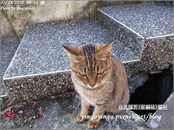 台北瑞芳(侯硐站)貓村20101128_R0016286