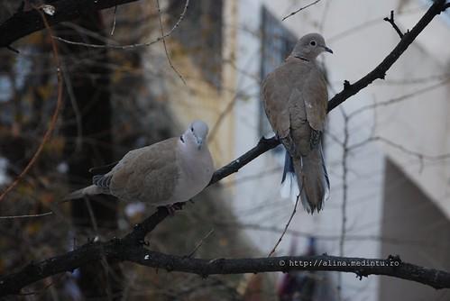 pigeons reloaded