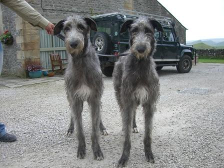 hounds at Peak District Holiday Cottage