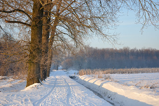 Een spoor in de sneeuw - A trace in the snow