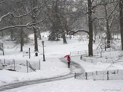 Under the Red Umbrella (CVerwaal) Tags: nyc newyorkcity winter snow newyork lumix centralpark umbrellas lumixlx3