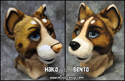 Hako and Bento