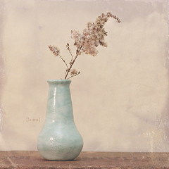234.365 (Laura L. Ruth) Tags: blue stilllife brown flower texture square beige aqua pale explore vase dreamy creamy lightblue