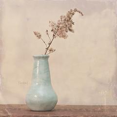234.365 (Laura L. Ruth) Tags: blue stilllife brown flower texture square beige aqua pale explore vase dreamy creamy lightblue
