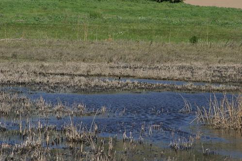 wetland 058