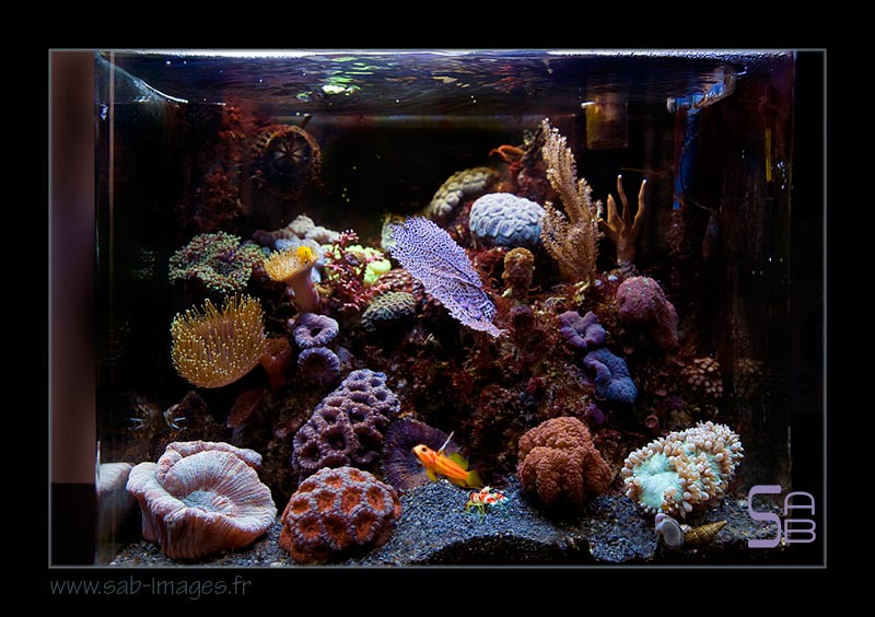 The world 39 s most recently posted photos of randalli for Aquarium recifal nano