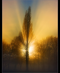Epic..... (Digital Diary........) Tags: trees light sunset mist fog amazing rays sunrays epic burnoff chrisconway epiclight