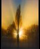 Epic..... (Digital Diary........) Tags: trees light sunset mist fog amazing rays sunrays epic burnoff chrisconway epiclight
