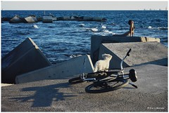 39-52x.Playa&Montaa (Evika_sparks) Tags: nikon nikond5200 playa chica perro bicicleta suelo mar agua barcelona yoga relajacin