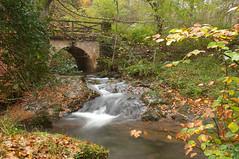 Ucieda (jrtorre) Tags: naturaleza nature water rio puente hojas lluvia agua nikon arboles bosque otoño nublado fotografia frío cantabria 2010 espuma d300 ucieda rinconesdecantabria jrtorre