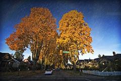 blenheim st (craiginvan) Tags: street canada vancouver columbia british blenheim