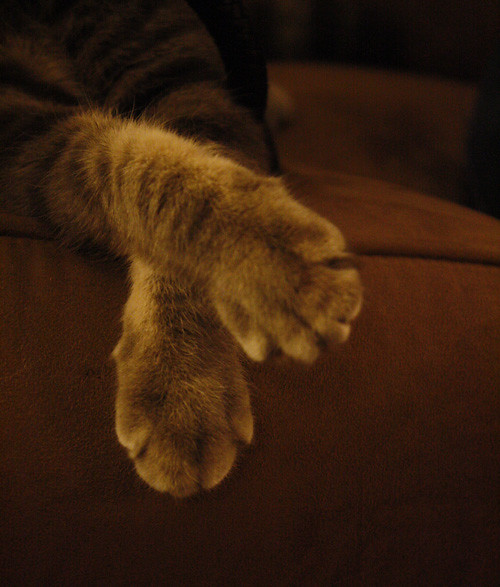 cutest paws