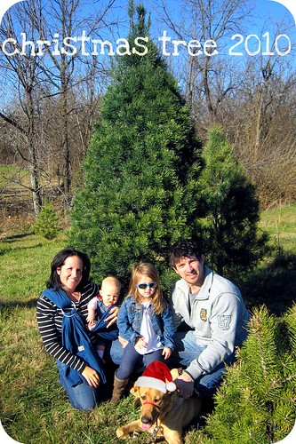 christmas tree farm 2010