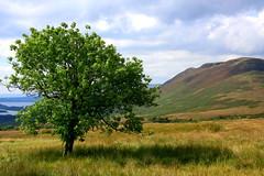 Connic Hill (NickD58) Tags: summer tree green scotland trossachs lochlomond balmaha lochlomondandthetrossachsnationalpark connichill