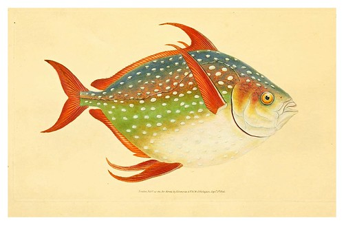 016-The natural history of British fishes 1802-Edward Donovan