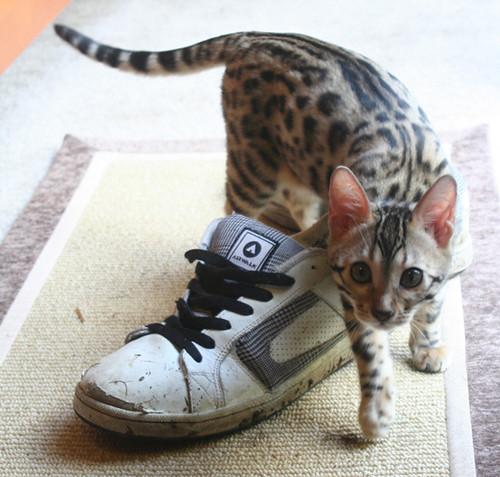 Mika-Shoe
