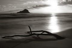 Driftwood, Hana, Maui (Jessica Veltri Photography) Tags: beach island hawaii maui driftwood hana density neutral alau