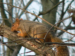 "Dec06_XMasRtrt_Squirrel1 • <a style=""font-size:0.8em;"" href=""http://www.flickr.com/photos/30765416@N06/5247464701/"" target=""_blank"">View on Flickr</a>"