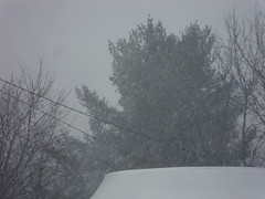 Snow Continues Falling In Marshfield, WI. (dccradio) Tags: trees winter snow storm wisconsin snowy snowstorm wi snowscene marshfield winterscene hubcity decembersnow centralwisconsin marshfieldwi