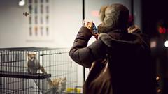 . (thericyip.com) Tags: street winter light toronto girl night kitten bokeh 169 iphone canoneos5d canon85mmf12lmarkii