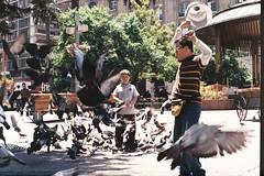 el niño espanta palomas (whachadoin) Tags: color film birds analog 200 palomas praktica plazadearmas mtl3 prakticamtl3 pentacon50mm18